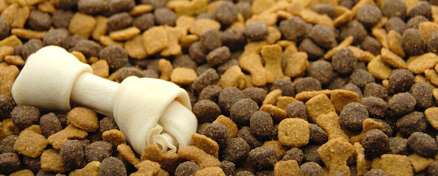 bad dog food